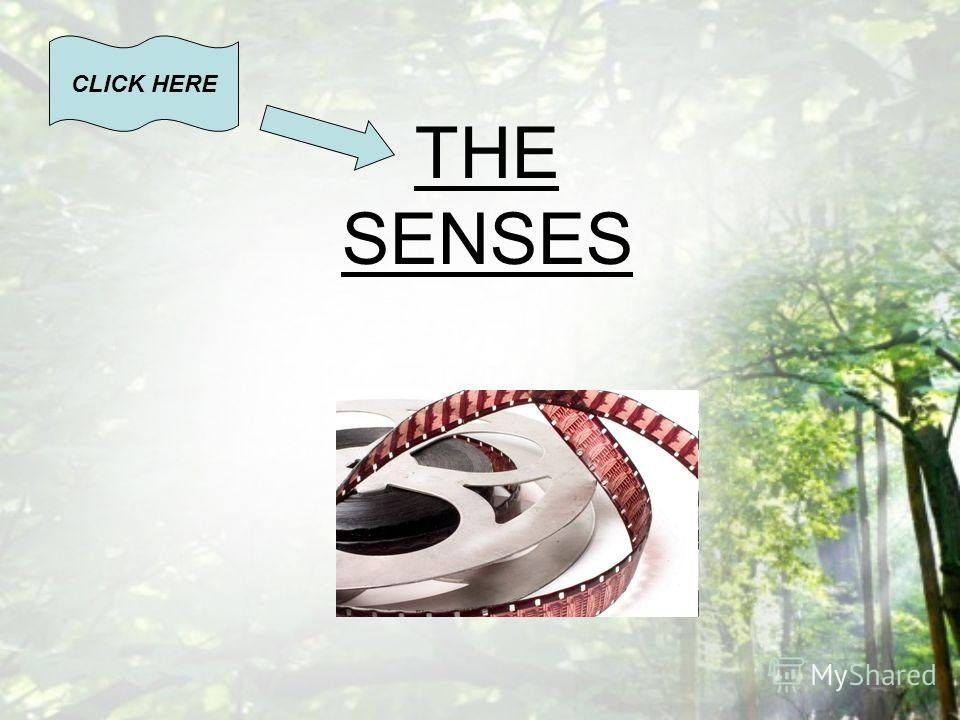 THE SENSES CLICK HERE