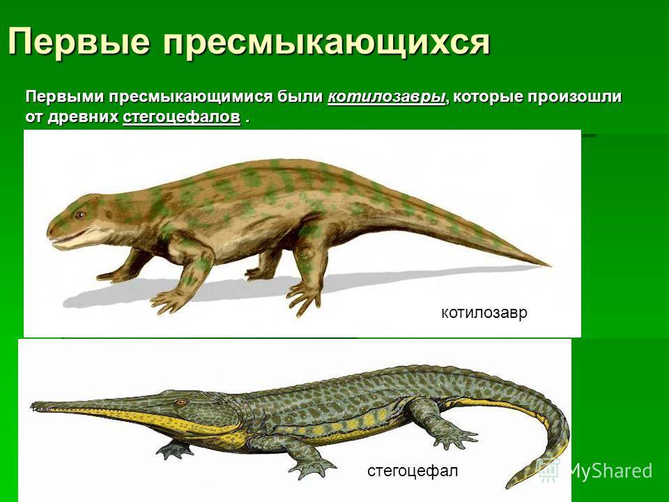 Первые пресмыкающихся Первыми пресмыкающимися были котилозавры, которые произошли от древних стегоцефалов. котилозавр стегоцефал