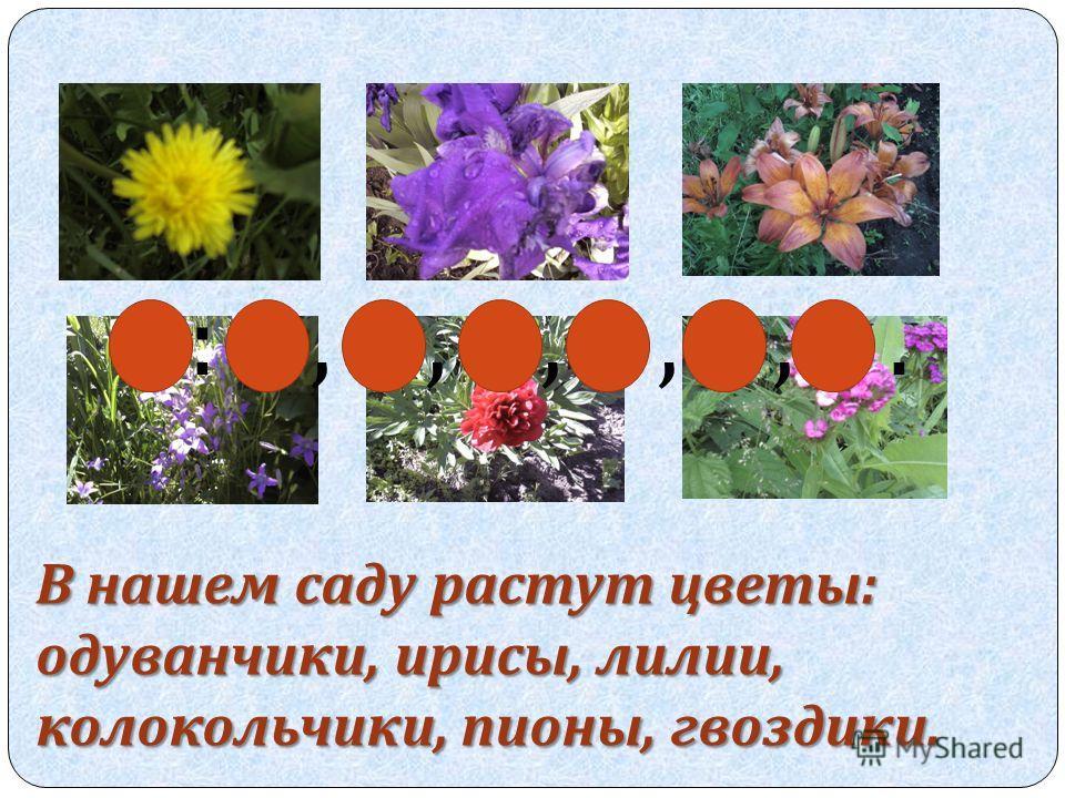 В нашем саду растут цветы: одуванчики, ирисы, лилии, колокольчики, пионы, гвоздики. :,,,,,.
