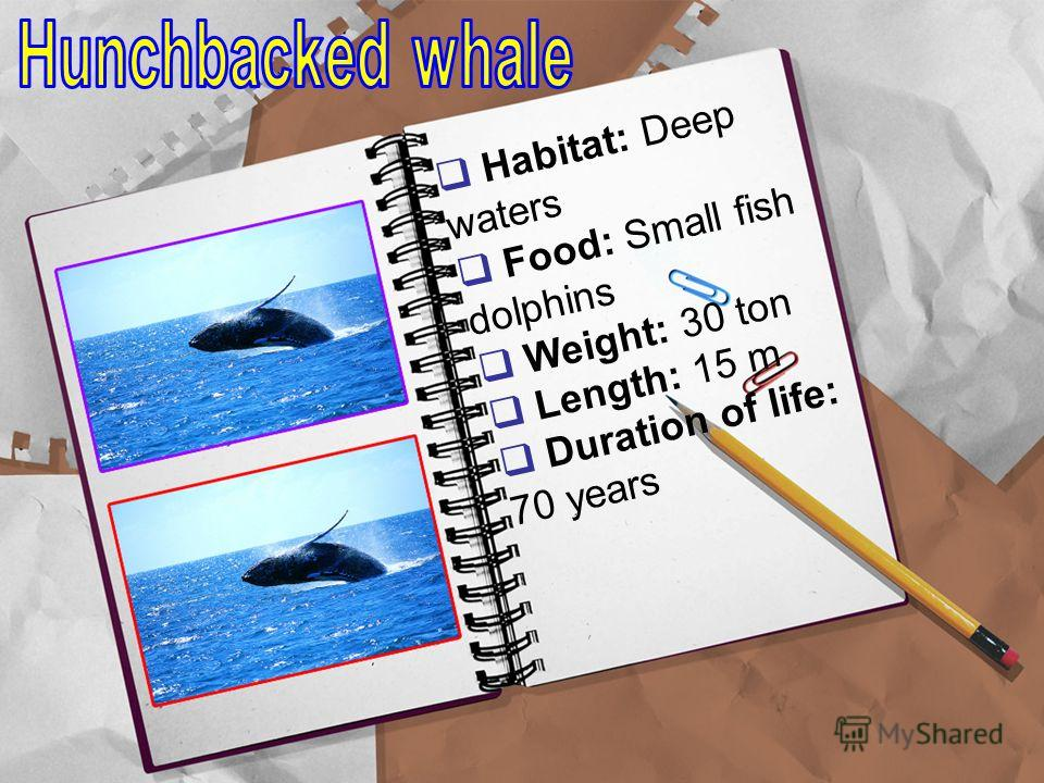 Habitat: Deep waters Food: Small fish dolphins Weight: 30 ton Length: 15 m Duration of life: 70 years