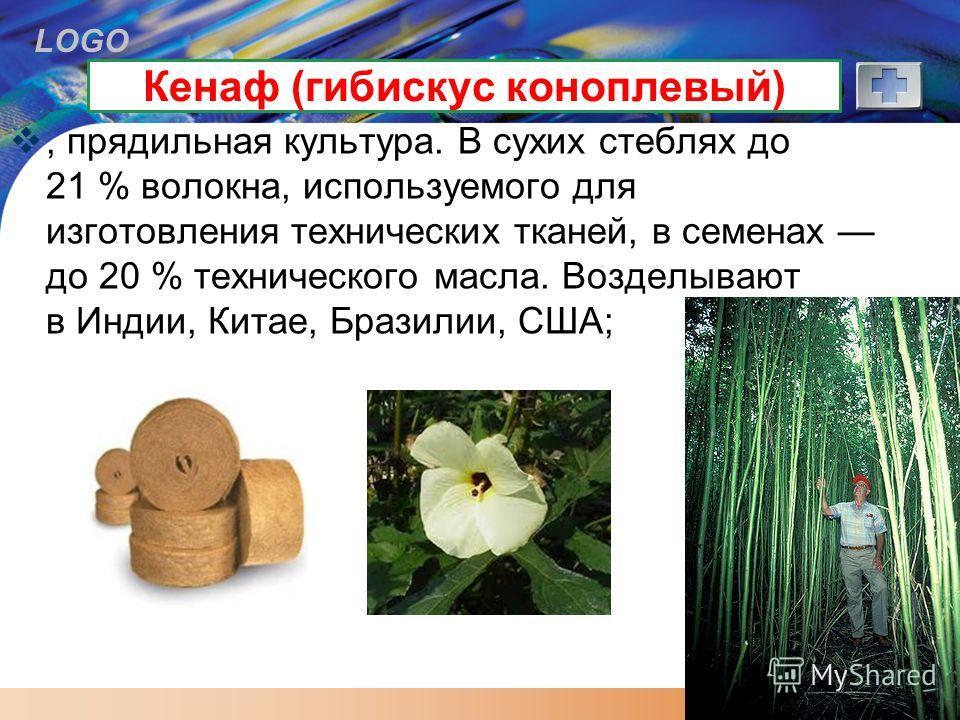 LOGO Кенаф (гибискус коноплевый), прядильная культура. В сухих стеблях до 21 % волокна, используемого для изготовления технических тканей, в семенах до 20 % технического масла. Возделывают в Индии, Китае, Бразилии, США;