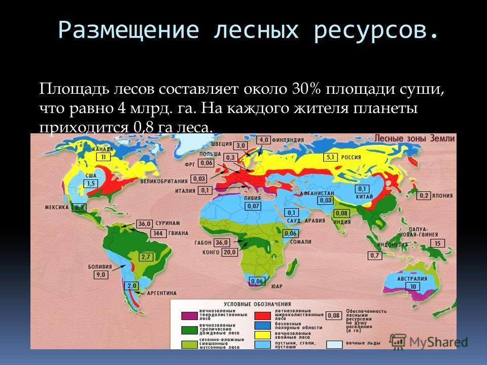 Размещение лесных ресурсов. Площадь лесов составляет около 30% площади суши, что равно 4 млрд. га. На каждого жителя планеты приходится 0,8 га леса.