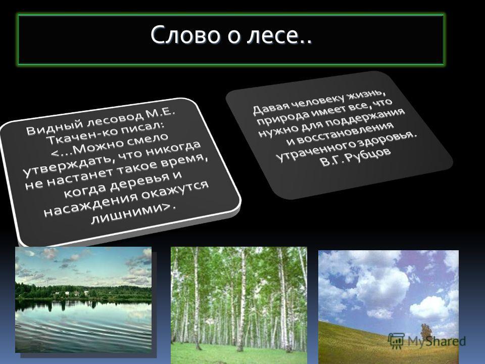 Слово о лесе..