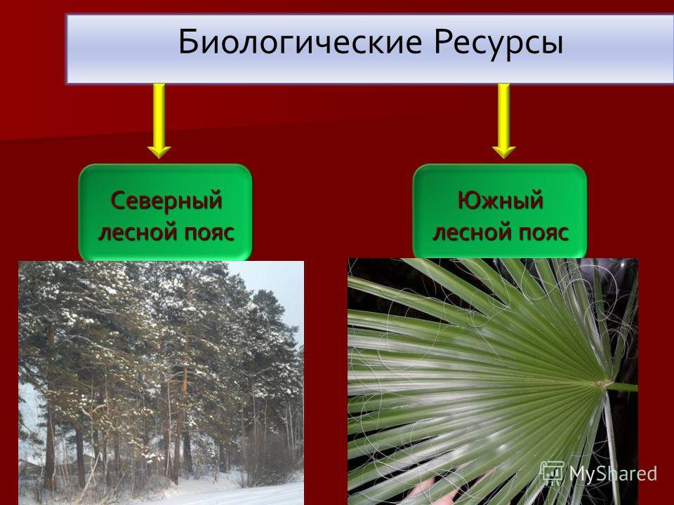 Биологические Ресурсы Северный лесной пояс Южный лесной пояс