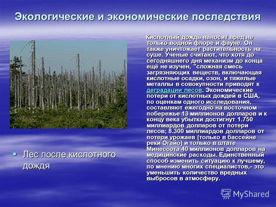 Экологические и экономические последствия Лес после кислотного дождя Лес после кислотного дождя Кислотный дождь наносит вред не только водной флоре и