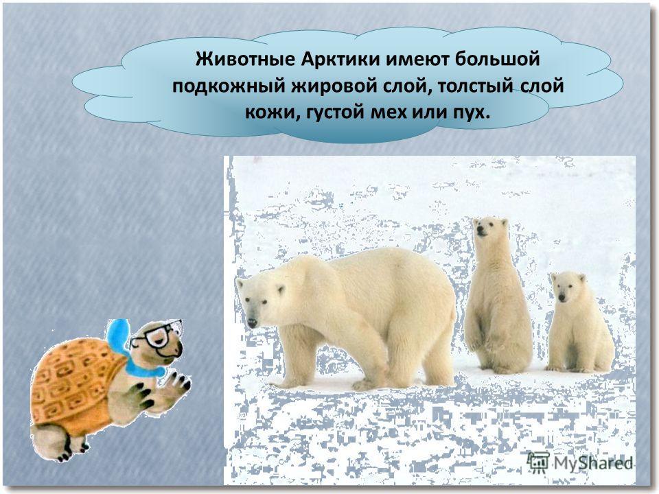 Животные Арктики имеют большой подкожный жировой слой, толстый слой кожи, густой мех или пух.