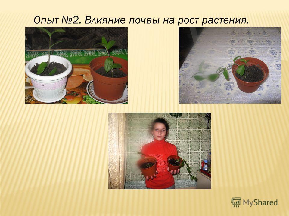 Опыт 2. Влияние почвы на рост растения.