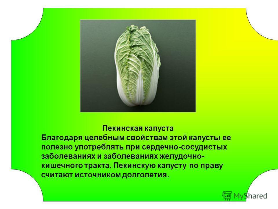 Пекинская капуста Благодаря целебным свойствам этой капусты ее полезно употреблять при сердечно-сосудистых заболеваниях и заболеваниях желудочно- кишечного тракта. Пекинскую капусту по праву считают источником долголетия.