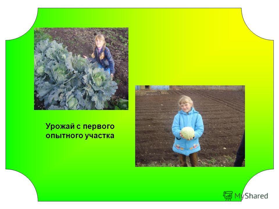 Урожай с первого опытного участка