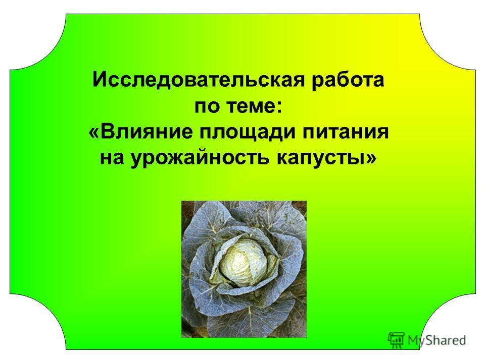 Исследовательская работа по теме: «Влияние площади питания на урожайность капусты»
