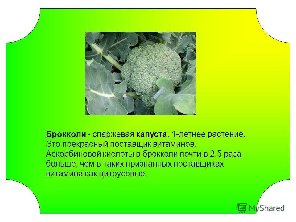 Брокколи - спаржевая капуста. 1-летнее растение. Это прекрасный поставщик витаминов. Аскорбиновой кислоты в брокколи почти в 2,5 раза больше, чем в таких признанных поставщиках витамина как цитрусовые.
