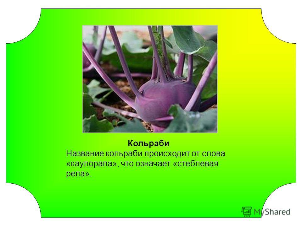 Кольраби Название кольраби происходит от слова «каулорапа», что означает «стеблевая репа».
