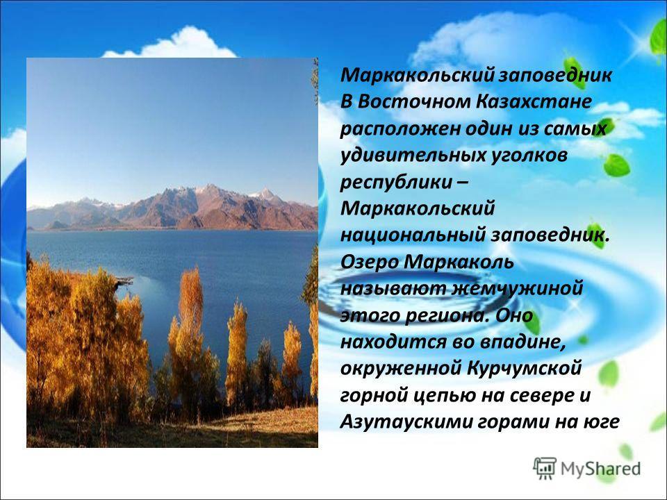 Маркакольский заповедник В Восточном Казахстане расположен один из самых удивительных уголков республики – Маркакольский национальный заповедник. Озеро Маркаколь называют жемчужиной этого региона. Оно находится во впадине, окруженной Курчумской горно