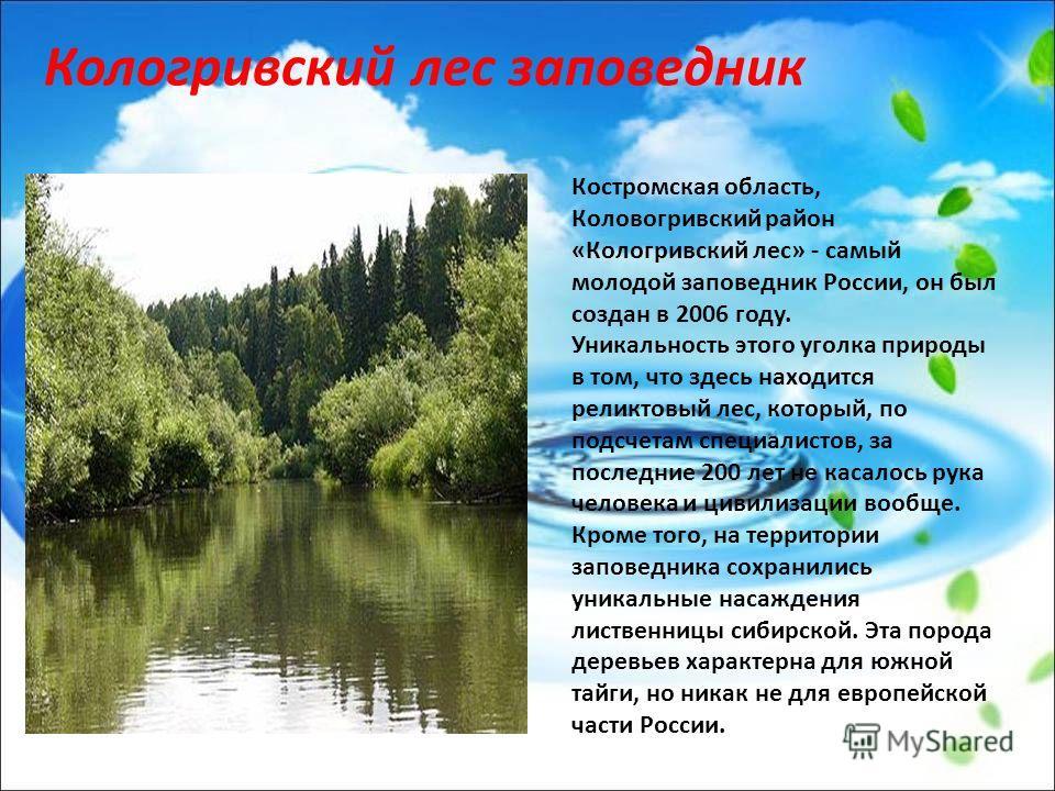 Костромская область, Коловогривский район «Кологривский лес» - самый молодой заповедник России, он был создан в 2006 году. Уникальность этого уголка природы в том, что здесь находится реликтовый лес, который, по подсчетам специалистов, за последние 2
