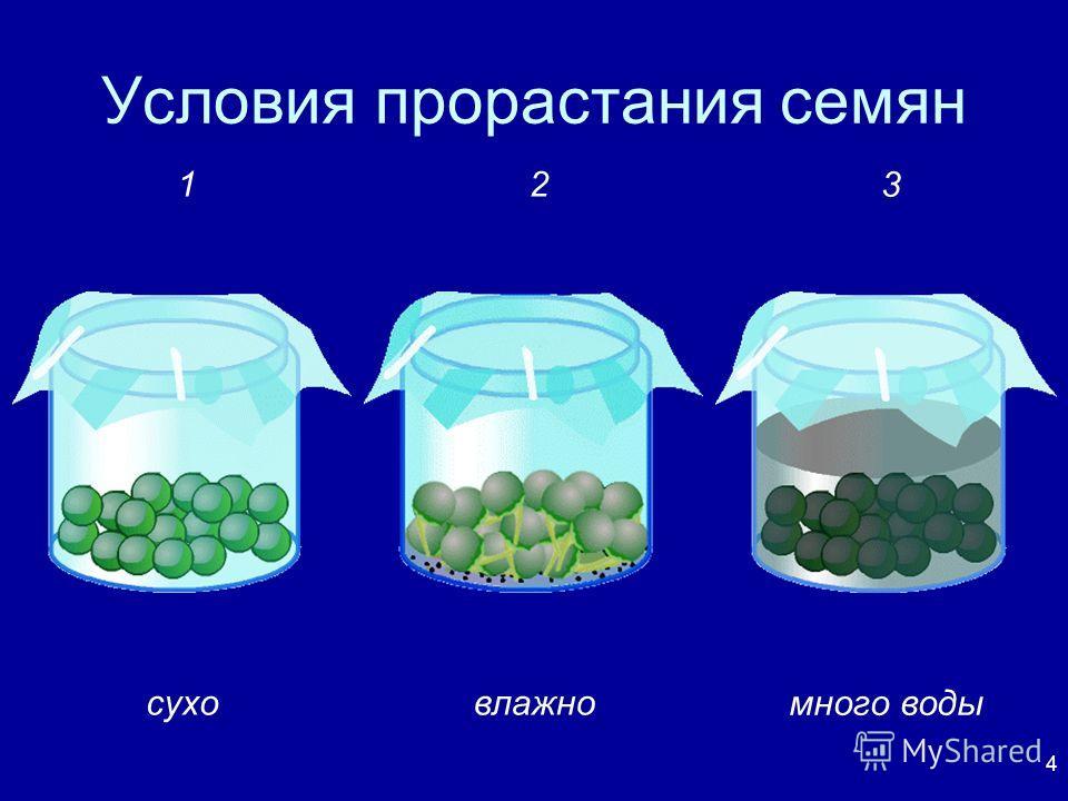 4 Условия прорастания семян суховлажно много воды 12 3