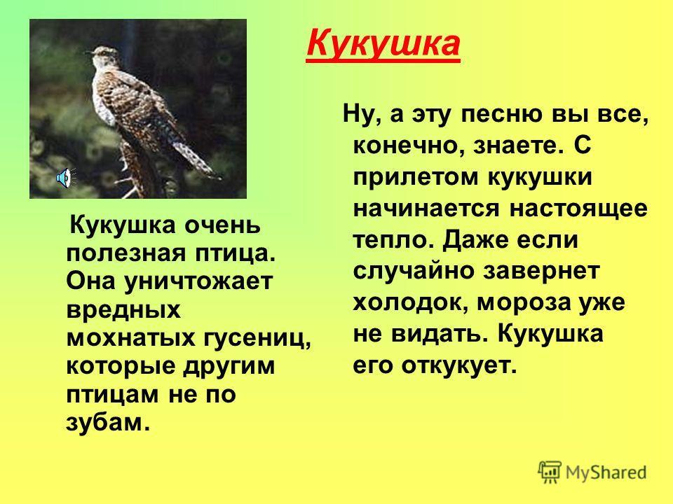 Ворона Это птица не перелётная живёт в лесу или рядом с жилищем человека. Они живут по одиночке, в стаи собираются очень редко. Вороне нравятся зёрна, плоды. Длина ее 47-50см.,длина хвоста 20см..