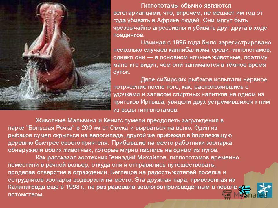 Вспышка сибирской язвы произошла в конце лета и убила, по меньшей мере, 220 гиппопотамов.