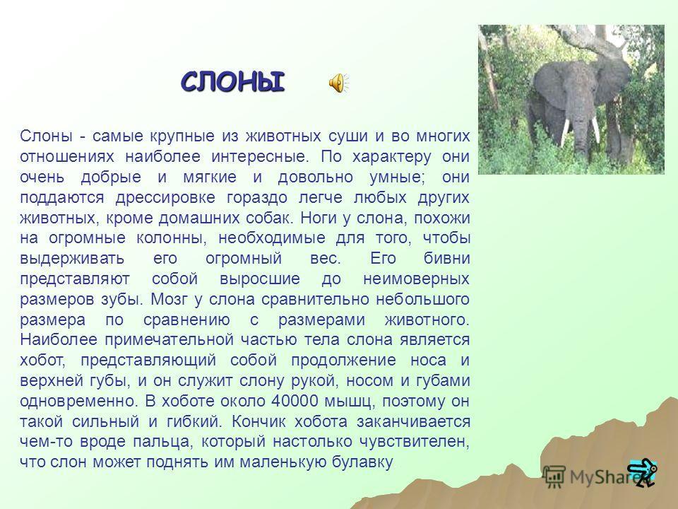 Слоны Бегемоты Носороги ЖирафыСодержание: Литература Выход