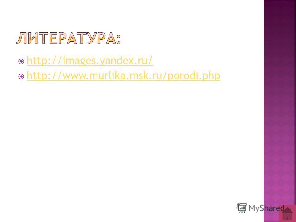 http://images.yandex.ru/ http://www.murlika.msk.ru/porodi.php
