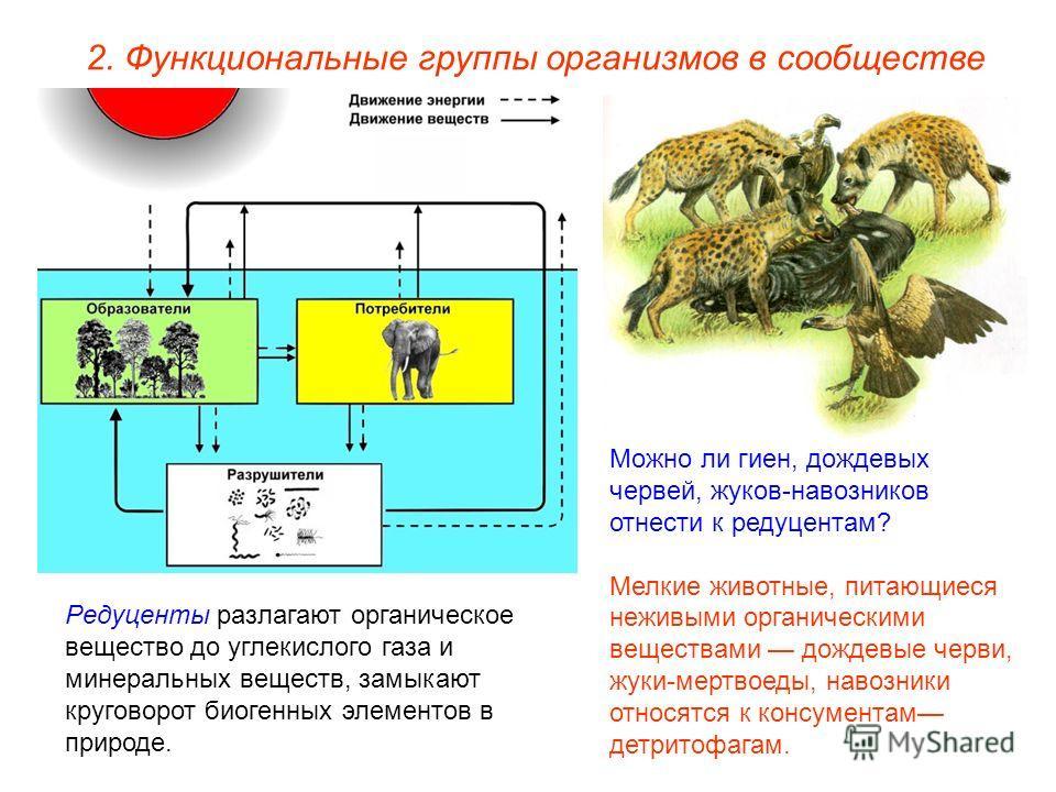 2. Функциональные группы организмов в сообществе Редуценты разлагают органическое вещество до углекислого газа и минеральных веществ, замыкают круговорот биогенных элементов в природе. Можно ли гиен, дождевых червей, жуков-навозников отнести к редуце