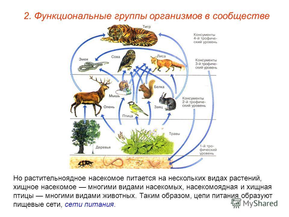 2. Функциональные группы организмов в сообществе Но растительноядное насекомое питается на нескольких видах растений, хищное насекомое многими видами насекомых, насекомоядная и хищная птицы многими видами животных. Таким образом, цепи питания образую