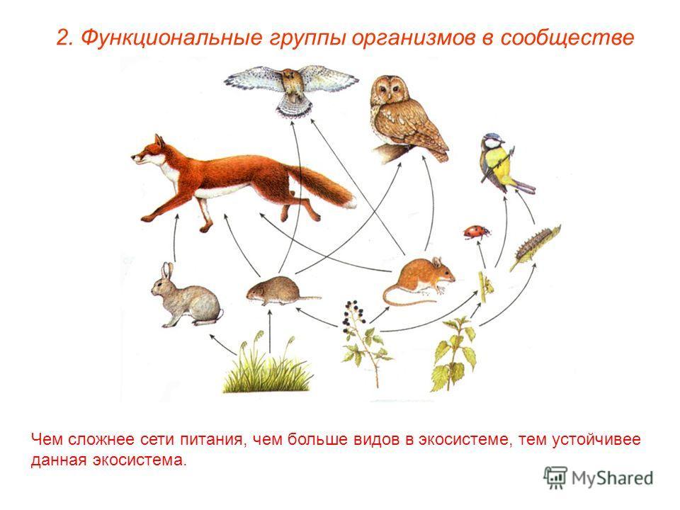 2. Функциональные группы организмов в сообществе Чем сложнее сети питания, чем больше видов в экосистеме, тем устойчивее данная экосистема.