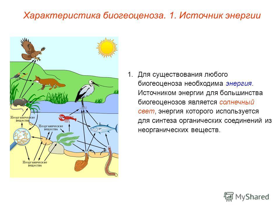 Характеристика биогеоценоза. 1. Источник энергии 1.Для существования любого биогеоценоза необходима энергия. Источником энергии для большинства биогеоценозов является солнечный свет, энергия которого используется для синтеза органических соединений и