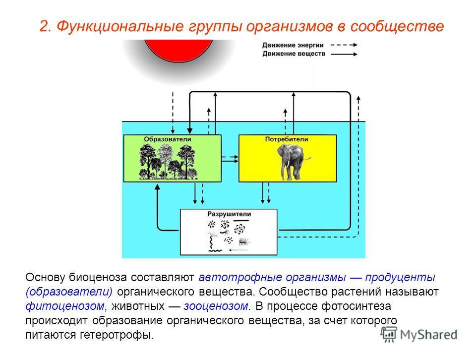 2. Функциональные группы организмов в сообществе Основу биоценоза составляют автотрофные организмы продуценты (образователи) органического вещества. Сообщество растений называют фитоценозом, животных зооценозом. В процессе фотосинтеза происходит обра