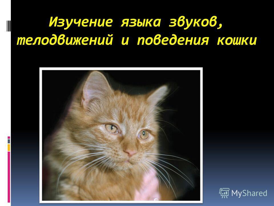Изучение языка звуков, телодвижений и поведения кошки