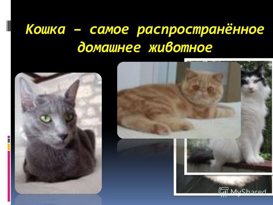 Кошка – самое распространённое домашнее животное
