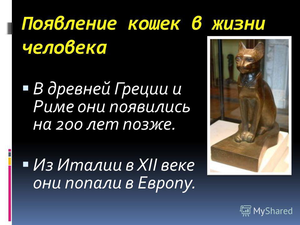 Появление кошек в жизни человека В древней Греции и Риме они появились на 200 лет позже. Из Италии в XII веке они попали в Европу.