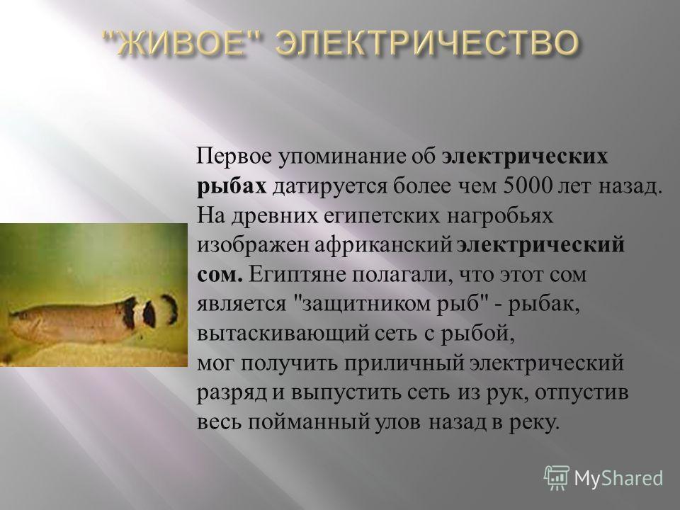 Первое упоминание об электрических рыбах датируется более чем 5000 лет назад. На древних египетских нагробьях изображен африканский электрический сом. Египтяне полагали, что этот сом является