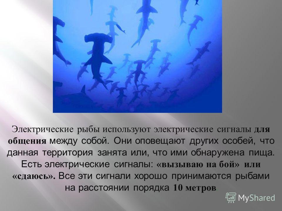 Электрические рыбы используют электрические сигналы для общения между собой. Они оповещают других особей, что данная территория занята или, что ими обнаружена пища. Есть электрические сигналы: «вызываю на бой» или «сдаюсь». Все эти сигнали хорошо при