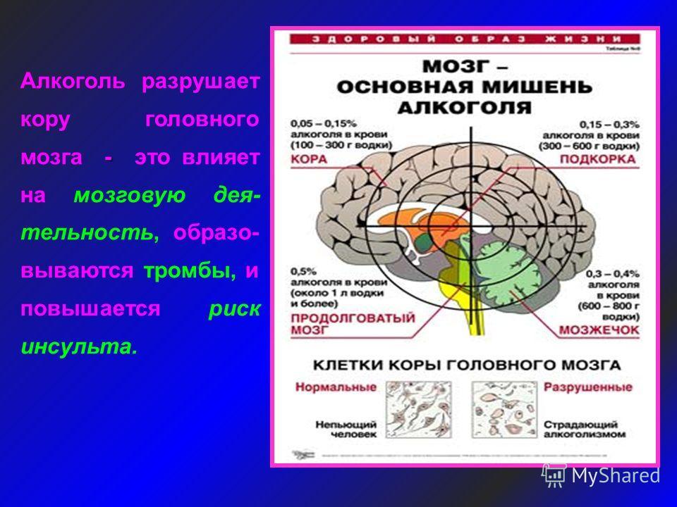 - Алкоголь разрушает кору головного мозга - это влияет на мозговую дея- тельность, образо- вываются тромбы, и повышается риск инсульта.