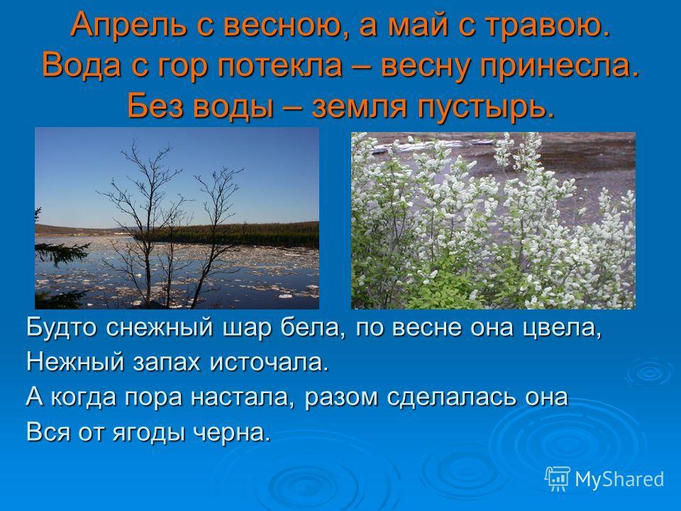 Апрель с весною, а май с травою. Вода с гор потекла – весну принесла. Без воды – земля пустырь. Будто снежный шар бела, по весне она цвела, Нежный запах источала. А когда пора настала, разом сделалась она Вся от ягоды черна.