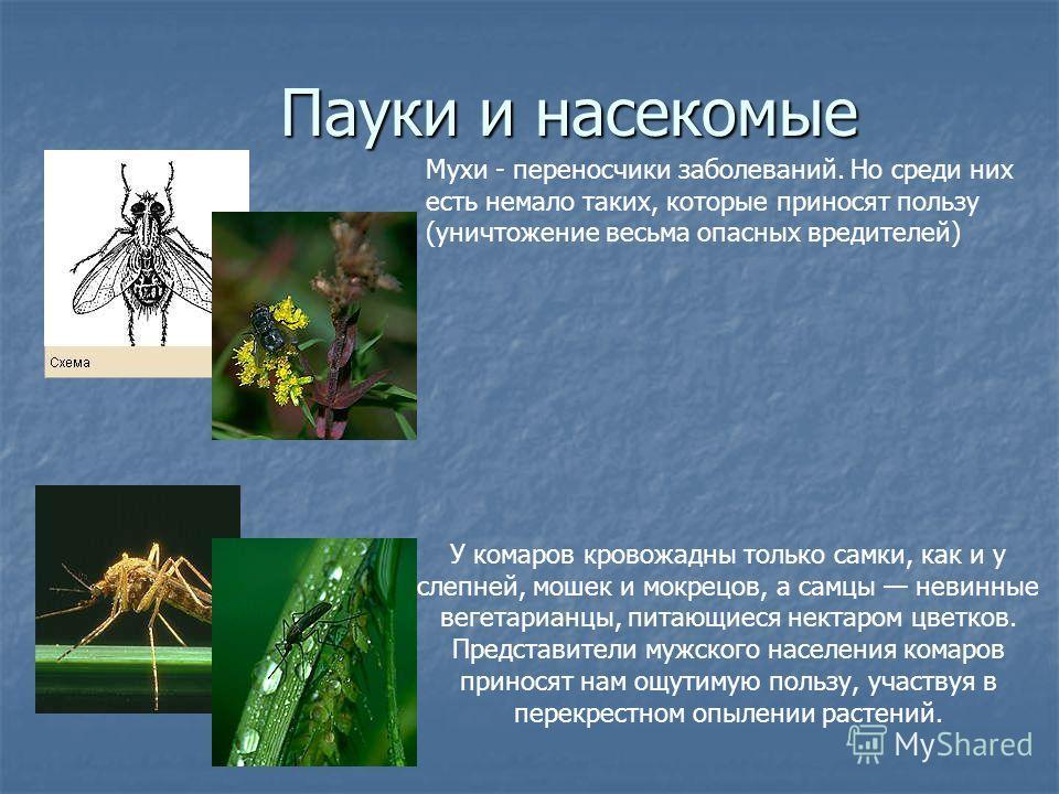 Пауки и насекомые Пауки и насекомые У комаров кровожадны только самки, как и у слепней, мошек и мокрецов, а самцы невинные вегетарианцы, питающиеся нектаром цветков. Представители мужского населения комаров приносят нам ощутимую пользу, участвуя в пе