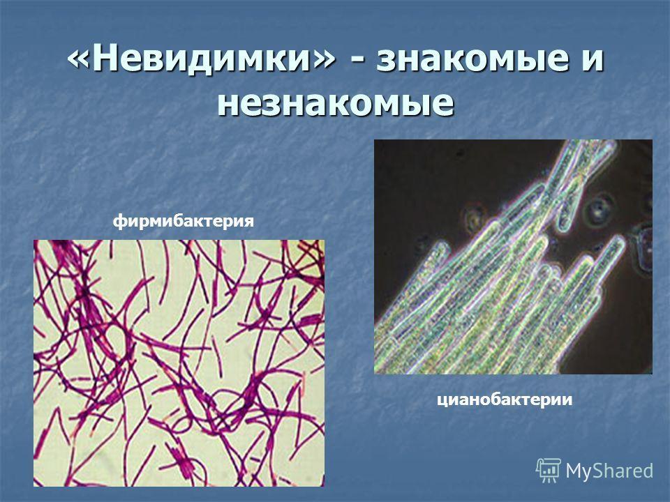 «Невидимки» - знакомые и незнакомые фирмибактерия цианобактерии