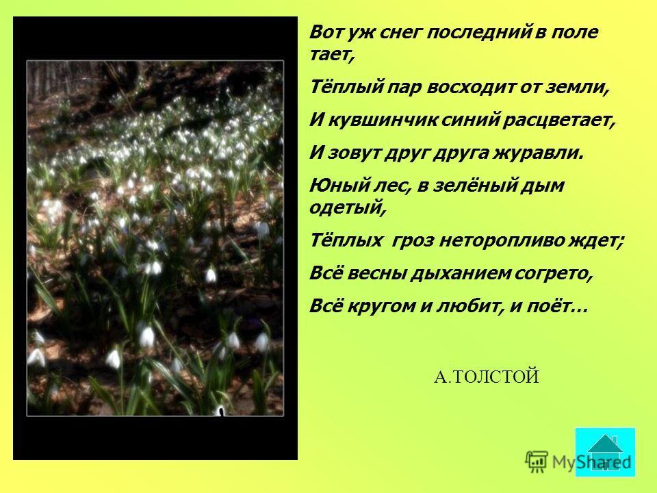 Вот уж снег последний в поле тает, Тёплый пар восходит от земли, И кувшинчик синий расцветает, И зовут друг друга журавли. Юный лес, в зелёный дым одетый, Тёплых гроз неторопливо ждет; Всё весны дыханием согрето, Всё кругом и любит, и поёт… А.ТОЛСТОЙ
