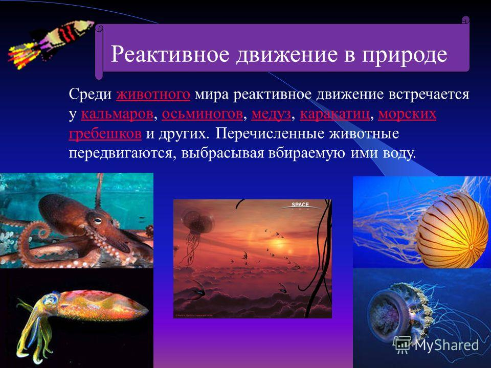Среди животного мира реактивное движение встречается у кальмаров, осьминогов, медуз, каракатиц, морских гребешков и других. Перечисленные животные передвигаются, выбрасывая вбираемую ими воду.животногокальмаровосьминоговмедузкаракатицморских гребешко