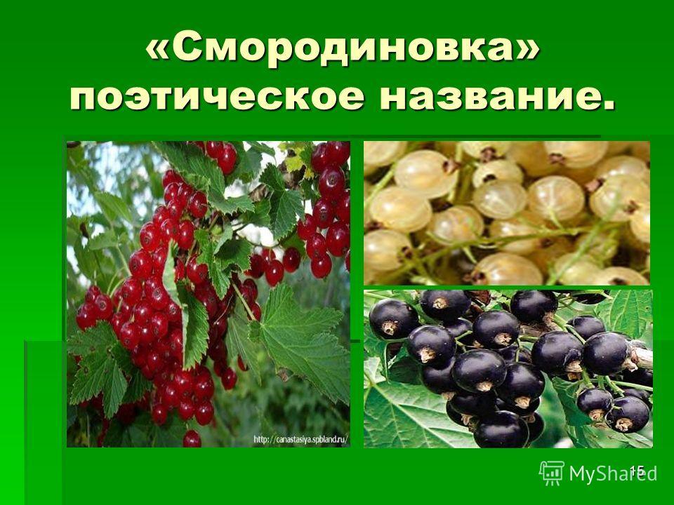 15 «Смородиновка» поэтическое название.
