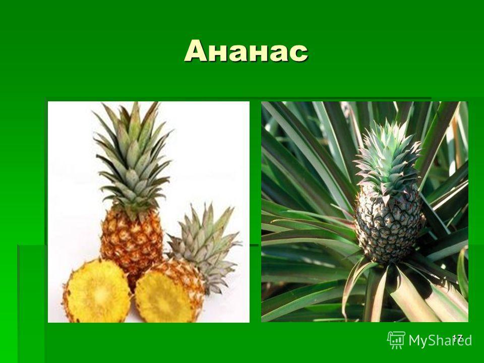 17 Ананас