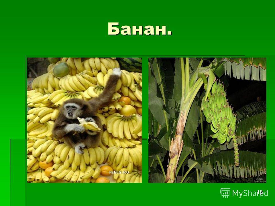 18 Банан.