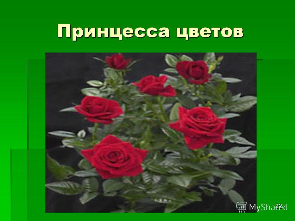22 Принцесса цветов