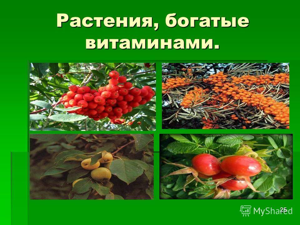 25 Растения, богатые витаминами.