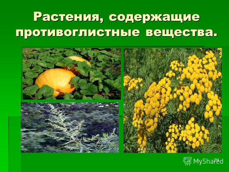 29 Растения, содержащие противоглистные вещества.