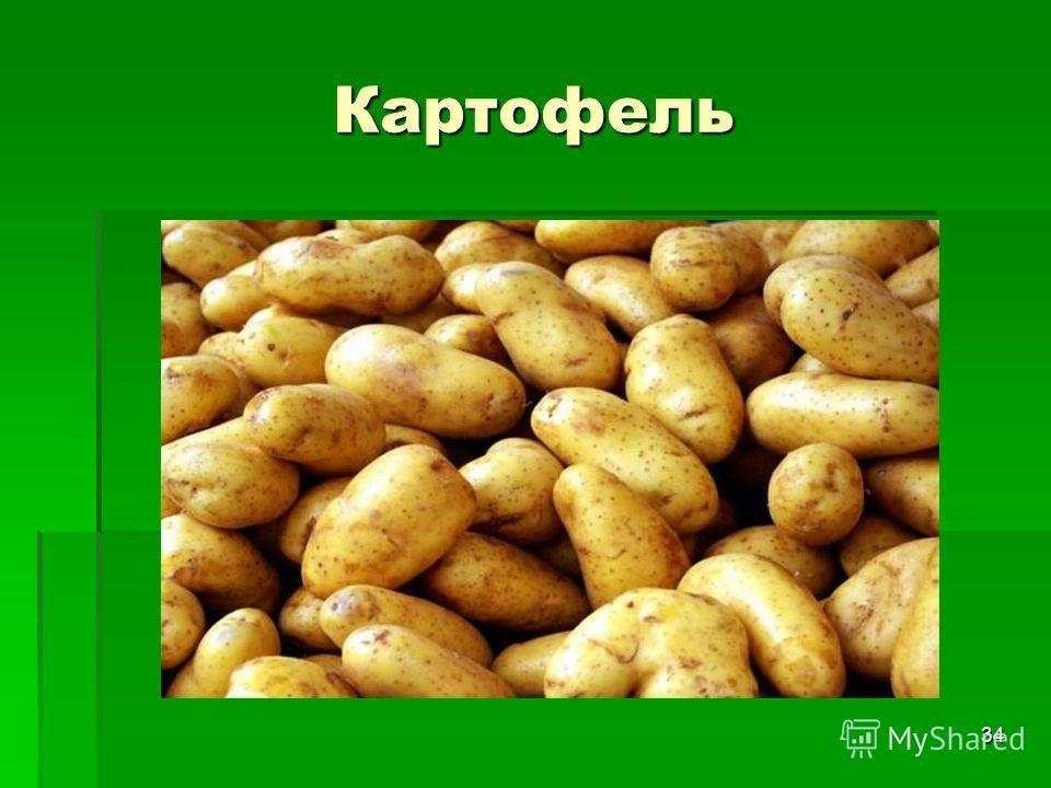 34 Картофель