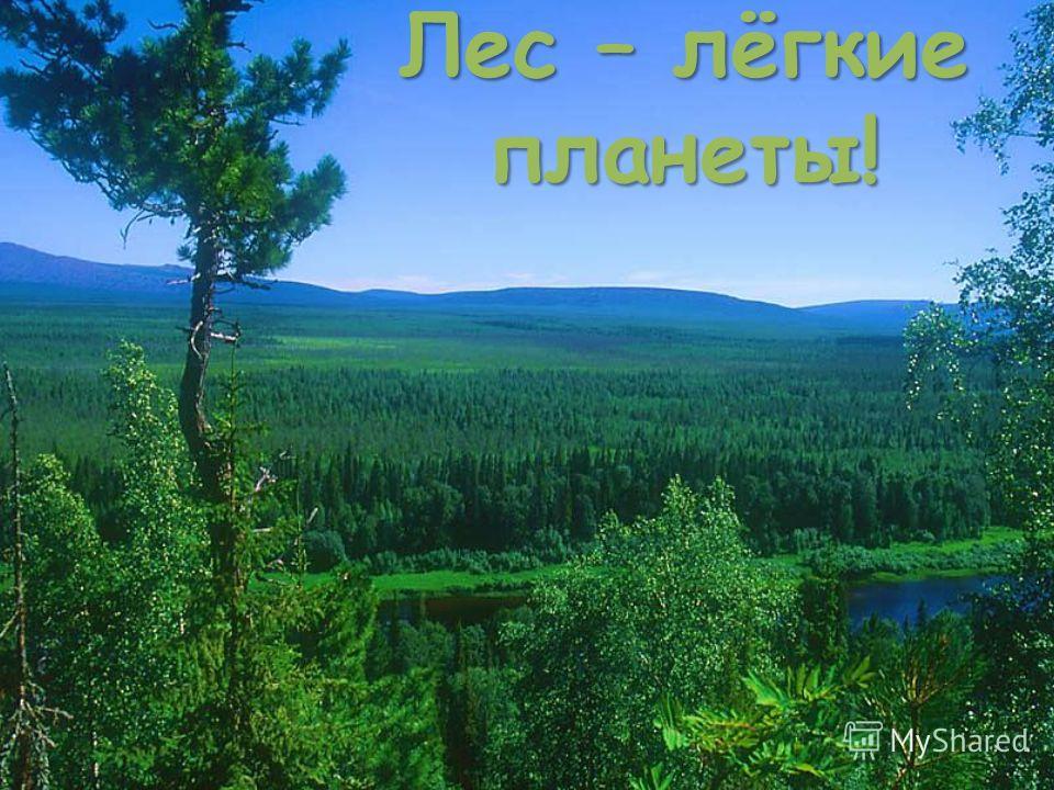 Лес – лёгкие планеты!