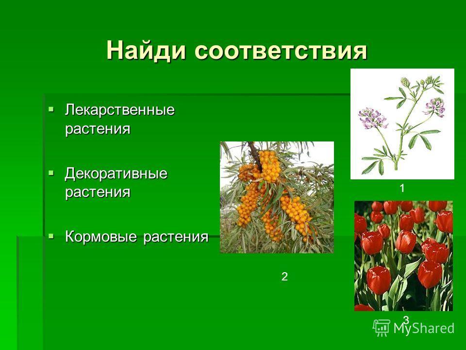 Найди соответствия Лекарственные растения Лекарственные растения Декоративные растения Декоративные растения Кормовые растения Кормовые растения 1 2 3