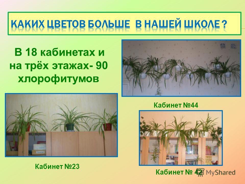 Кабинет 42 Кабинет 44 В 18 кабинетах и на трёх этажах- 90 хлорофитумов Кабинет 23