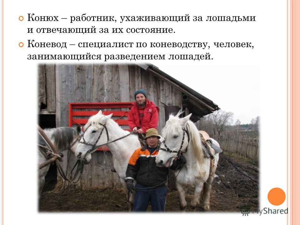 Конюх – работник, ухаживающий за лошадьми и отвечающий за их состояние. Коневод – специалист по коневодству, человек, занимающийся разведением лошадей.